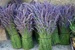 Séjours Lavandes - Lavandes en fleurs