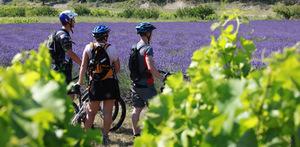 Bike Rental in Drôme Provençale Grignan
